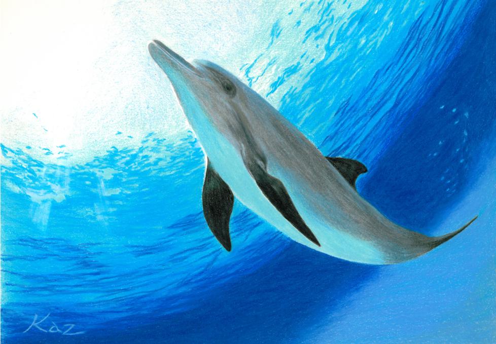 Dolphin2013-A